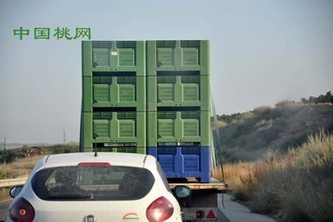 图片展示西班牙桃分级包装车间
