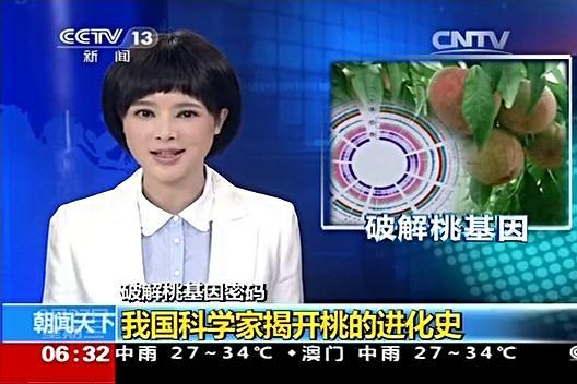 央视新闻报道郑果所桃基因组研究取得阶段性成果