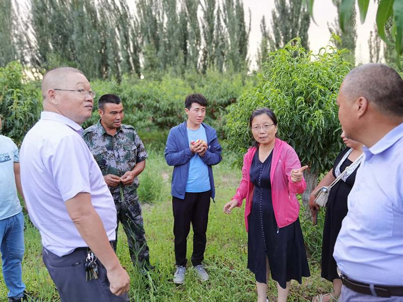 郑果所桃资源与育种创新团队赴新疆南疆开展产业调研和科技扶贫工作